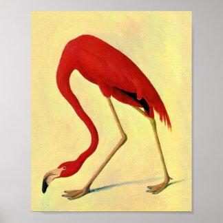 Audubon American Flamingo Painting Poster