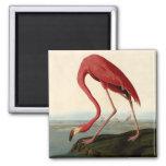 Audubon American Flamingo Refrigerator Magnet