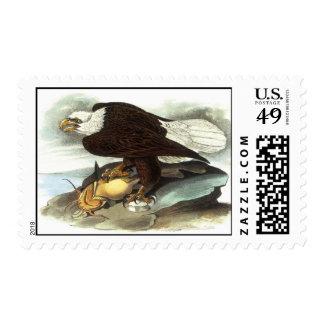 Audubon Bald Eagle Postage