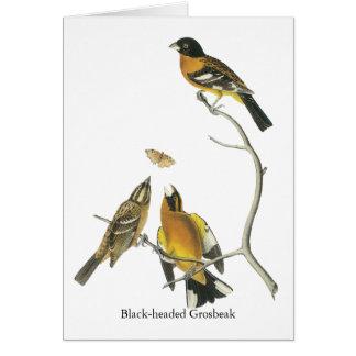Audubon Black-headed Grosbeak Cards