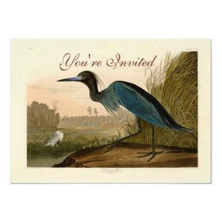 Audubon Blue Crane Heron Birds of America Card