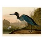 Audubon Blue Crane Heron Birds of America Postcard