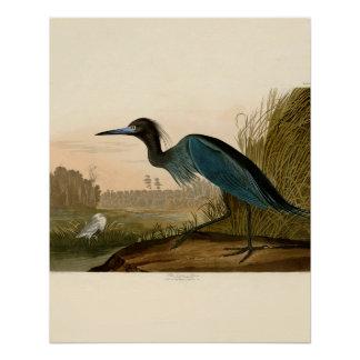 Audubon Blue Heron Poster