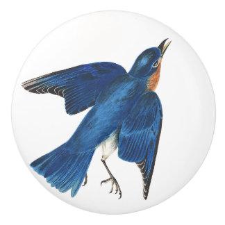Audubon Bluebird Bird Wildlife Animal Knob