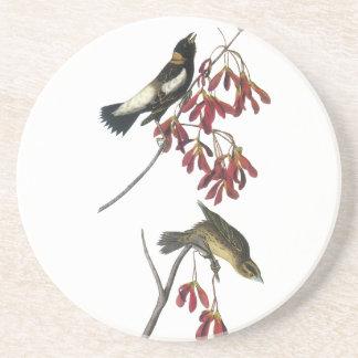 Audubon Bobolink Beverage Coasters