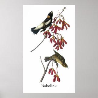 Audubon Bobolink Poster