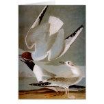 Audubon: Bonaparte's Gull Card