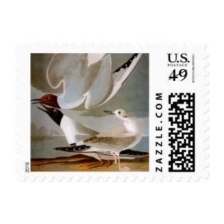 Audubon: Bonaparte's Gull Stamp