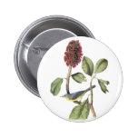 Audubon Canada Warbler Pinback Buttons