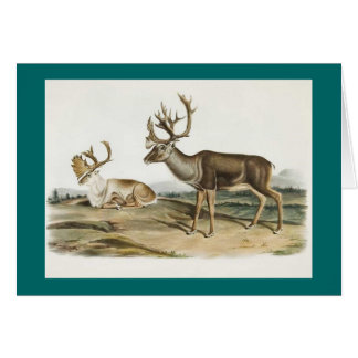 Audubon - Caribou - Reindeer Greeting Card