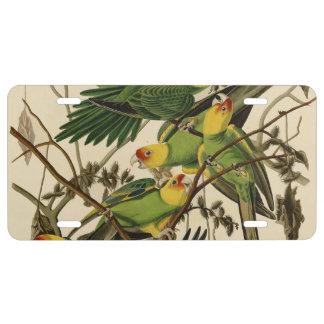 Audubon Carolina Parrot Print Birds of America License Plate