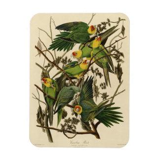 Audubon Carolina Parrot Print Birds of America Magnet