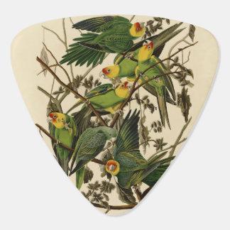 Audubon Carolina Parrot Print Birds of America Pick