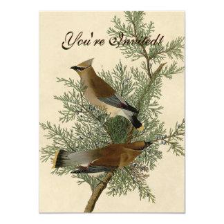 Audubon Cedar Waxwing Bird Card