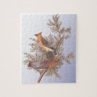 Audubon Cedar Waxwing Bird on Evergreen Juniper Jigsaw Puzzle