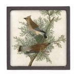 Audubon Cedar Waxwing Bird Premium Trinket Box