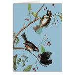 Audubon: Chickadee Card