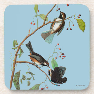 Audubon: Chickadee Coasters