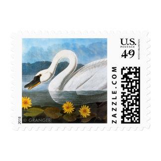 Audubon: Cisne común Estampillas