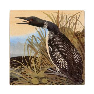 Audubon: Common Loon Wooden Coaster