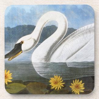 Audubon: Common Swan Drink Coaster