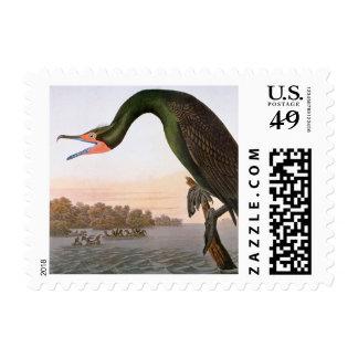 Audubon: Cormorán con cresta doble Sellos Postales