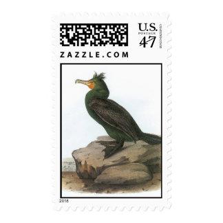 Audubon Cormorant Postage