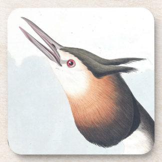 Audubon Crested el práctico de costa del animal de Apoyavasos