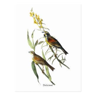 Audubon Dickcissel Postales