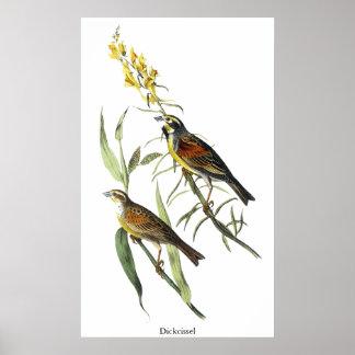 Audubon Dickcissel Poster