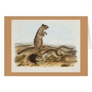 Audubon - Douglasses Spermophile Greeting Card