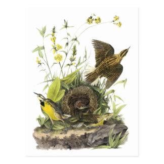 Audubon Eastern Meadowlard Postcard
