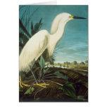 Audubon: Egret Card