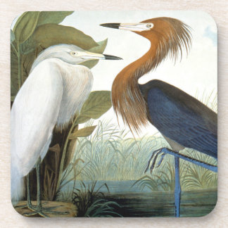 Audubon: Egret rojizo o garza púrpura Posavasos De Bebidas