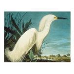 Audubon: Egret Tarjeta Postal