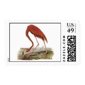 Audubon Flamingo Postage