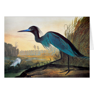 Audubon: Garza de pequeño azul Tarjeta Pequeña