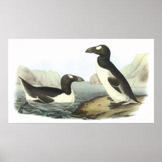 Audubon Great Auk Poster