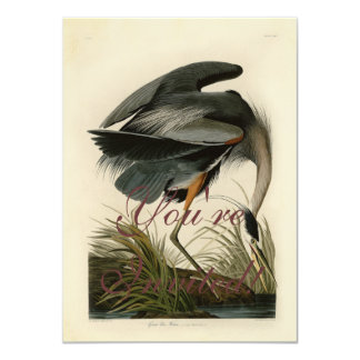 Audubon Great Blue Heron Birds Card