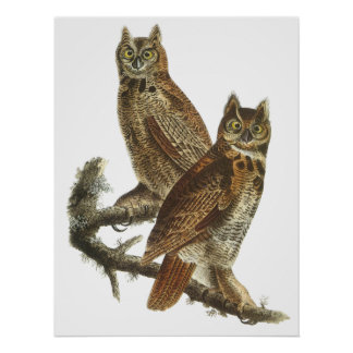 Audubon Great Horned Owls Poster or Print