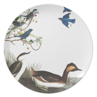 Audubon Grebes Bluebirds Birds Wildlife Plate