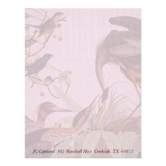 Audubon Heron Birds Collage Stationery Letterhead