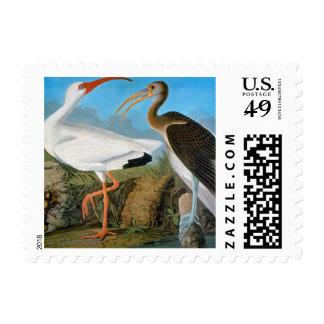 Audubon: Ibis blanco Timbre Postal
