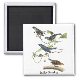 Audubon Indigo Bunting Print Magnet