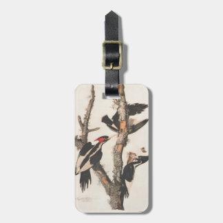 Audubon Ivory-Billed Woodpecker Bag Tag