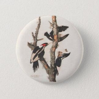 Audubon Ivory-Billed Woodpecker Button