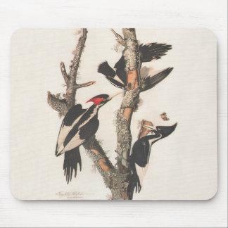 Audubon Ivory-Billed Woodpecker Mouse Pad