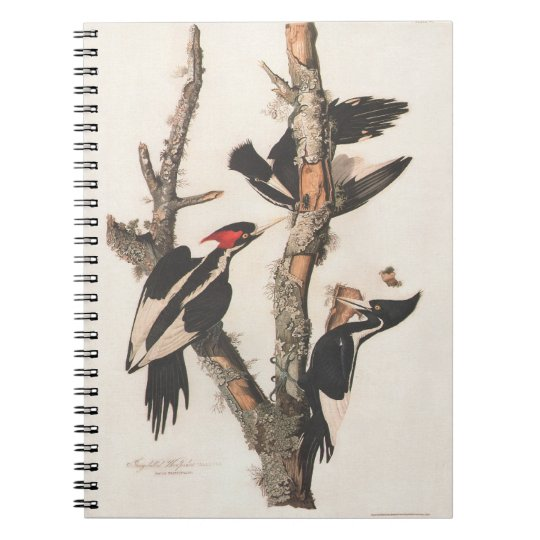 Audubon Ivory-Billed Woodpecker Notebook