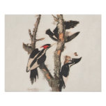 Audubon Ivory-Billed Woodpecker Poster