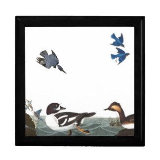 Audubon Kingfisher Bluebird Bird Wildlife Gift Box